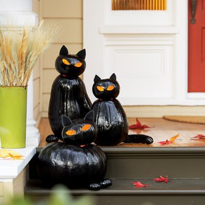 blackcat-cats