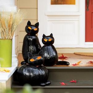 blackcat-cats