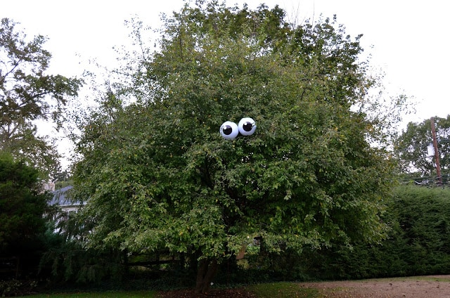 eyeballs-tree