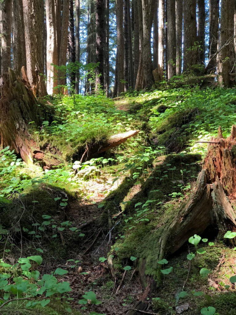 Icy Strait Point - forest in alaska